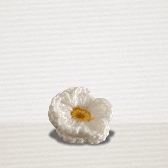 Weisse Ansteckblume mit gelber Blüte
